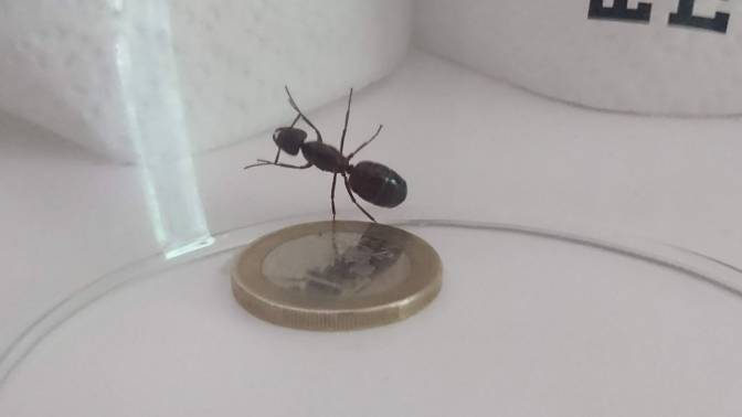Photos showing off a captured ant held in Gwantanimo Bay. The POW was later released unharmed.