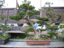 Bonsai garden, Fukui, Japan