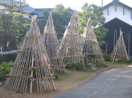 Winter protection for trees, Fukui, Japan